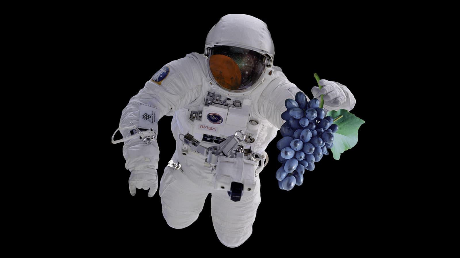 Astronaut fliegt durchs All und hält dabei Rotweintrauben in der Hand.
